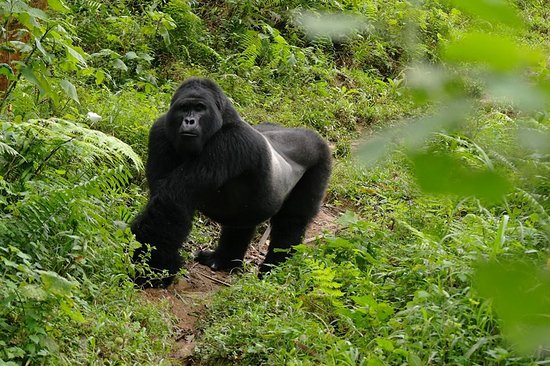 Gatatu Safaris