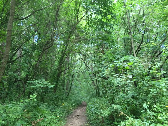 Ada, MI: Nice pretty hike