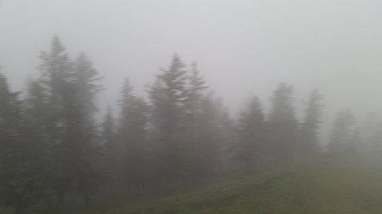 Qinghai, China: Trees seen through the fog.