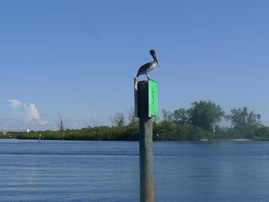 Osprey, فلوريدا: Pelican at Post