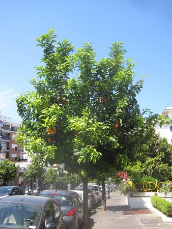Cesare Augusto: The hotel is on the avenue of oranges