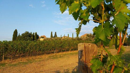 Borgo Tre Rose: Borgo widziane z winnicy