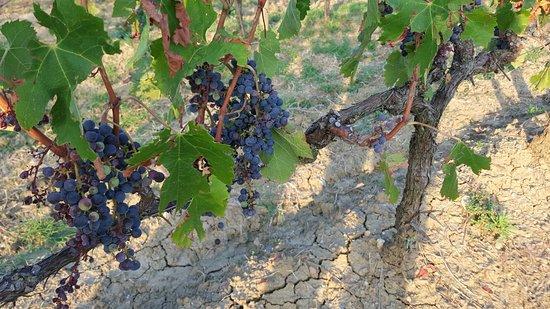 Borgo Tre Rose: Winnica za progiem