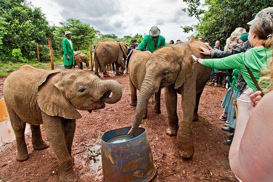 David Sheldrick Wildlife Trust: Close encounters
