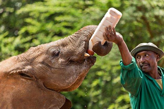 David Sheldrick Wildlife Trust: Adorable elephants