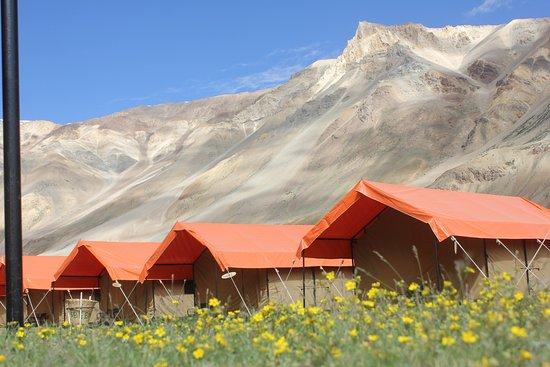 Goldrop Camps Sarchu and Sissu: होश वालों को ख़बर क्या बेख़ुदी क्या चीज़ है इश्क़ कीजे फिर समझिये ज़िन्दगी क्या चीज़ है  उन से न