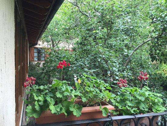 Casa Masip: Jardín