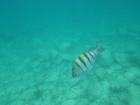 Grand Case, St-Martin / St Maarten: Nice clear water!