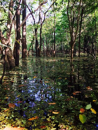 Amazon Gero Tours: The Flooded Jungle Floor