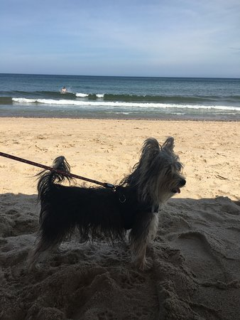 Nauset Light Beach: my dog on beach