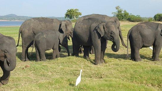Habarana, Sri Lanka: 20160824_162022_large.jpg