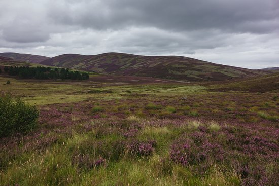 Aviemore and the Cairngorms, UK : Cairngorms National Park