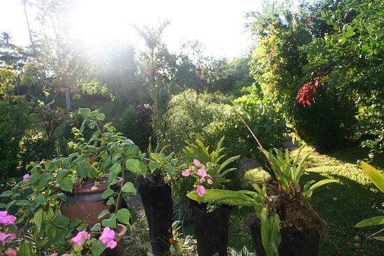 Nakia Resort & Dive: Gardens at Nakia