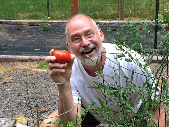 Cape Lookout Bed n Breakfast: Jim with first tomato of the season