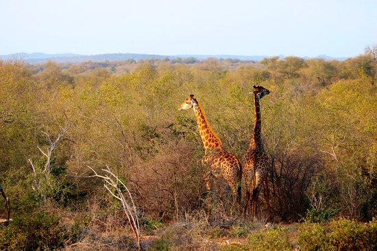 Gravelotte, Zuid-Afrika: We saw amazing wildlife with Claudia and Robin every day.