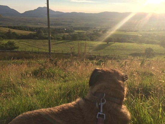 Bronaber, UK: Alfie watching the sun go down from a walk behind the cabins