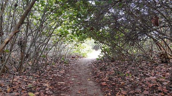 Parque Nacional Natural Tayrona: sendero que lleva a arroyito, uno de los tantos paisajes del recorrido