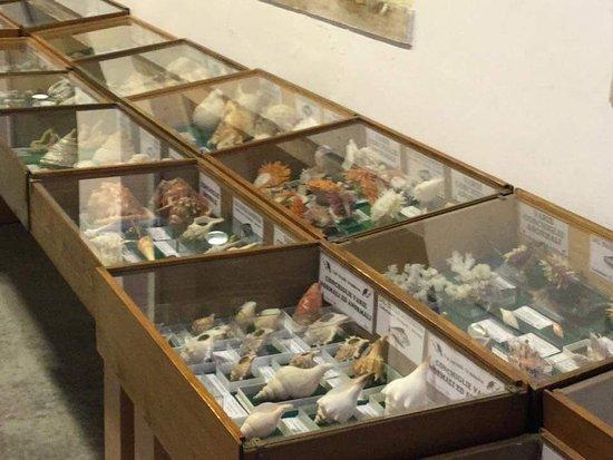 Museo Ittico