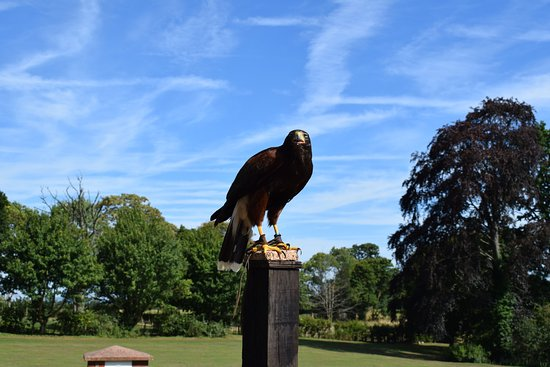 Newent, UK: One of the many beautiful birds at the ICBP