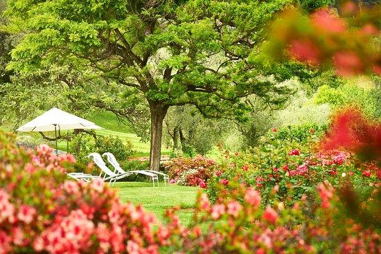 Hotel Belvedere Bellagio: Garden Detail