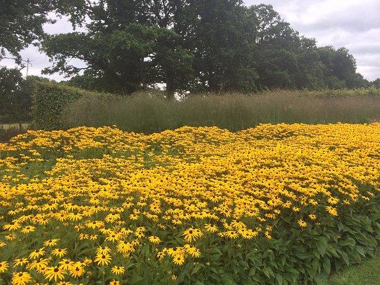 Henfield, UK : Beautiful flowers