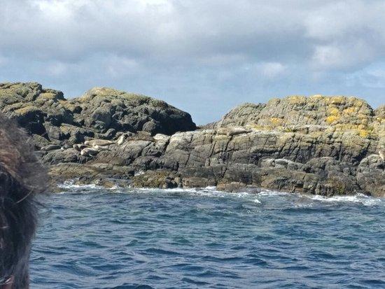 Sea Life Surveys: IMG_20160824_121925_large.jpg