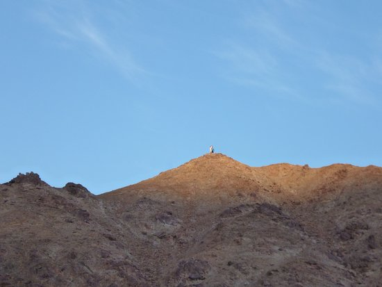 Richtersveld Transfrontier National Park, Afrique du Sud : A quick walk up the low ridge above the campsite at sunrise