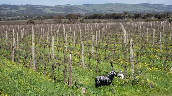 McLaren Vale, Australia: The Black sheep and view from tasting room