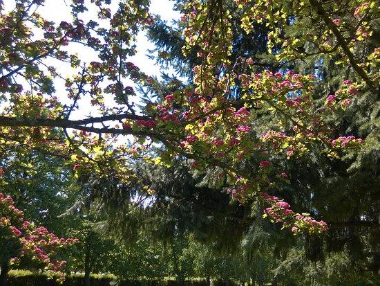 Nagykanizsa, Hungría: Spring at the Csonakazo Lake