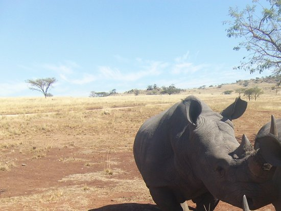Paulpietersburg, Sudáfrica: Rhino on the farm