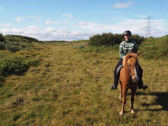 Kopavogur, Islandia: sunny horse tour