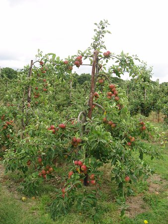 Staplehurst, UK: Coxes