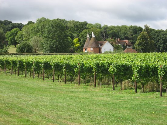 Staplehurst, UK: Through the vinyards