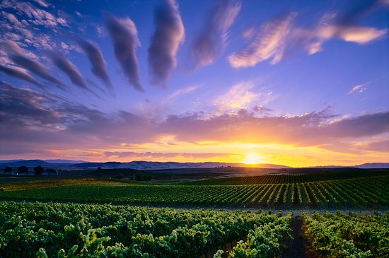 A beautiful sunset in the Carneros appellation of Sonoma Valley showcases beautiful colors durin