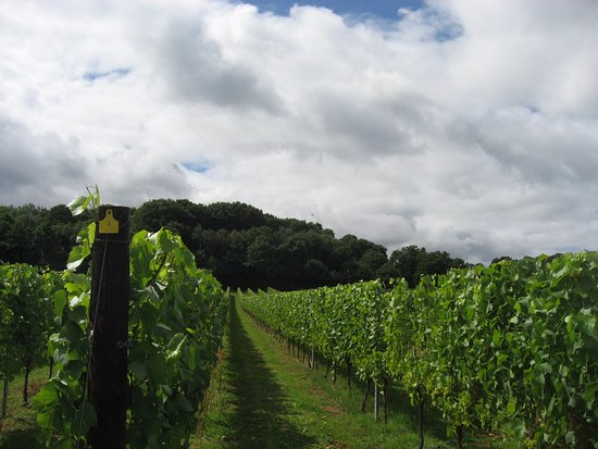 Staplehurst, UK: Vines