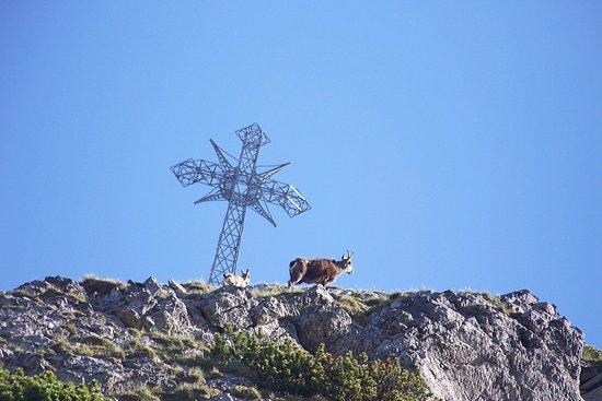 Giewont Mountain: i też na stają w tym samym miejscu, co samiec-tata.