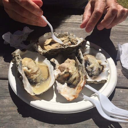 Petaluma, CA: Overcooked oysters, a disapointment.
