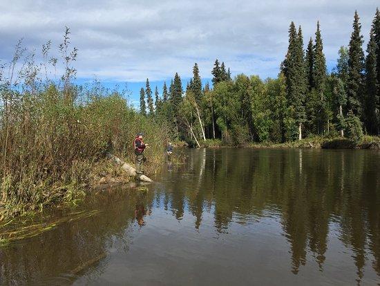 Grayling fishing trip aug 22nd caught 26 fish even for Fishing in fairbanks alaska
