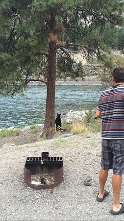 Spences Bridge, Canada : when the bear decided to come into our camp site