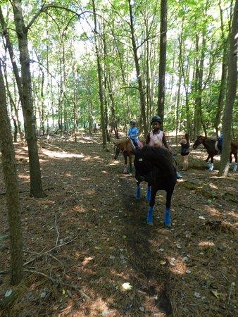 Atlantic, VA: On a trail through the woods.