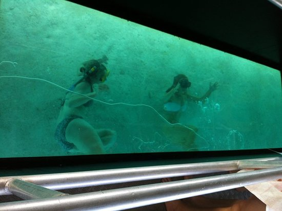 Muri, Îles Cook : Glass bottom boat antics
