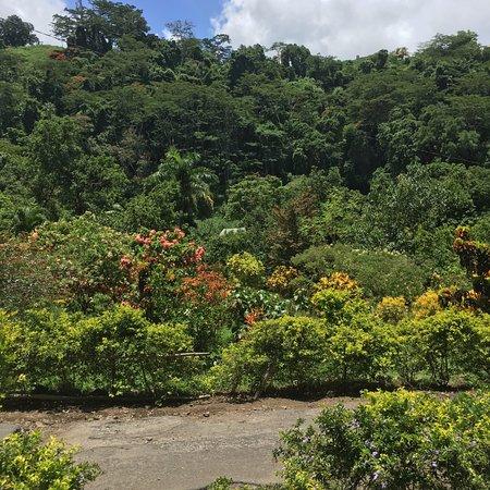 Dominica Botanic Gardens: Garden