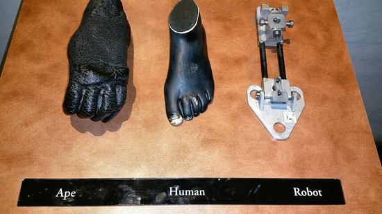 San Diego Museum of Man: Human Evolution?