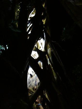 Santa Elena, Costa Rica: Tree