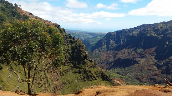 Waimea Canyon: The Canyon view from one of the hiking trails