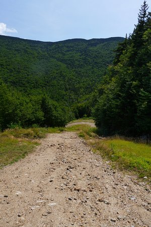 Wildcat Mountain: Service Road