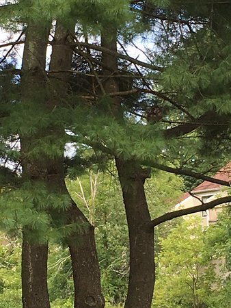 East Stroudsburg, เพนซิลเวเนีย: there's an eagle in there (on the right)