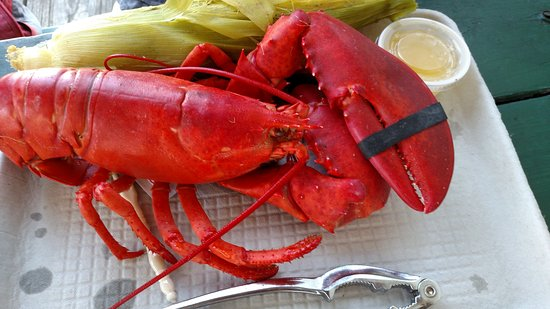 Georgetown, ME: Five Island's Lobster