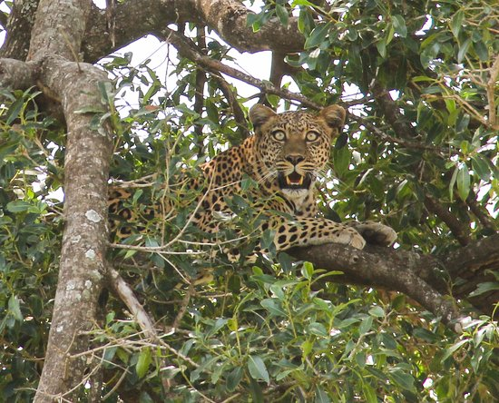Kicheche Mara Camp : this lady was right outside the camp!