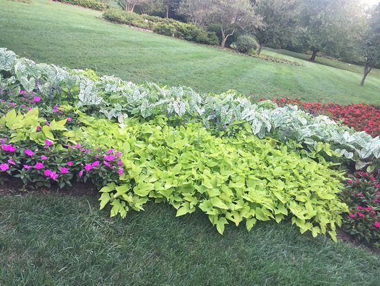 Sherwood Gardens: It has a Beautiful view.  Great for people who wanna relax with family. Great view